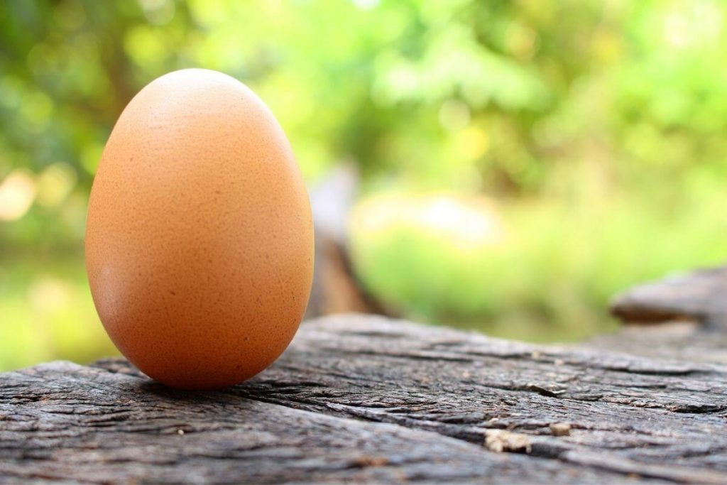 A hen's egg on a wooden table outdoors in Nature