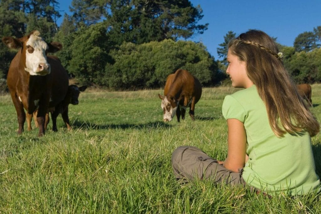 A young girl sitting watching cows in a green field